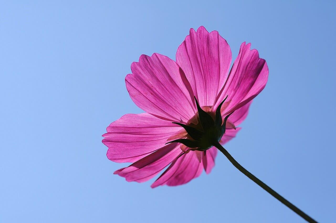 flower-1219360_1280